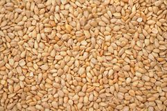 Sunflower seed. Dried peeled sunflower seed for background uses Royalty Free Stock Images