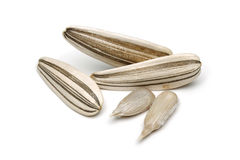 Sunflower seed. Sunflower white seed with background Royalty Free Stock Photos