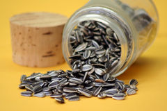 Sunflower seed. In laboratory glass bottle Stock Images