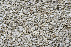 Sunflower seed. Healthy natural salted sunflower seed royalty free stock photos