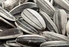 Sunflower seed background Stock Photography