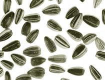 Sunflower seed background Royalty Free Stock Photography