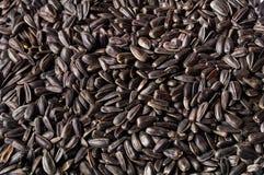 Sunflower Seed background - black version Stock Photo