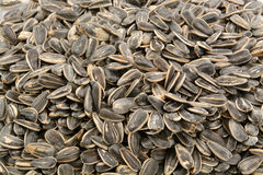 Sunflower seed background Royalty Free Stock Photos