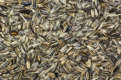 Sunflower seed for background Stock Photography