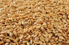 Sunflower seed backgrounds Royalty Free Stock Images