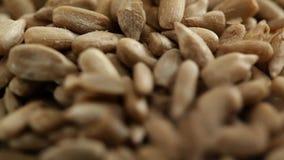 Sunflower seed - closeup stock video footage