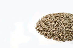 Sunflower seed without crust Royalty Free Stock Images