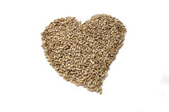 Sunflower seed without crust stock image