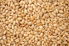 Sunflower seed. Dried peeled sunflower seed for background uses Royalty Free Stock Photos