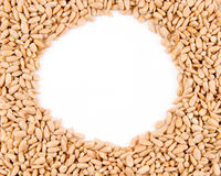 Sunflower seed frame Stock Photos