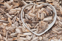 Sunflower seed Stock Photos