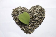 Sunflower seed with heart shape Royalty Free Stock Images