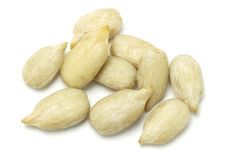 Sunflower seed kernels Stock Images