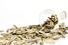 Sunflower seed. In laboratory glass Royalty Free Stock Photos