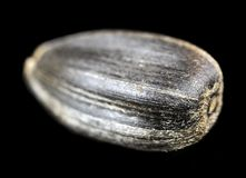 Sunflower Seed Macro Stock Images