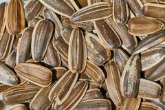 Sunflower seed in a pile Royalty Free Stock Photo