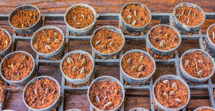 sunflower seed in pot Royalty Free Stock Photo