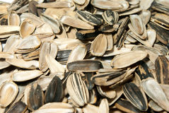 Sunflower seed rind Stock Photo