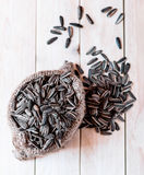 Sunflower seed Stock Images
