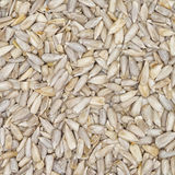 Sunflower Seed Texture Royalty Free Stock Photography