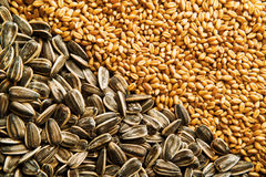 Sunflower seed and wheat grains Stock Photography