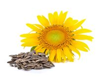 Sunflower seed on white background. Sunflower seed on a white background Royalty Free Stock Image