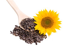 Sunflower seed on a wooden spoon with sunflower. On a white background Stock Photo