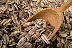 Sunflower seed Stock Image
