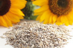 Sunflower seeds. Seeds of sunflower for eating Royalty Free Stock Photos