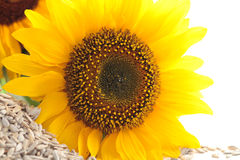 Sunflower and seeds Royalty Free Stock Photography