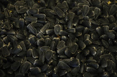 Sunflower seeds. This is a macro detail of fullgrown seeds of sunflower Royalty Free Stock Photos