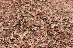 Sunflower seeds royalty free stock image