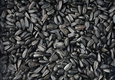 Free Sunflower Seeds Royalty Free Stock Images - 17816409