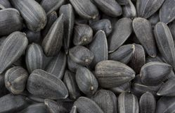 Sunflower seeds Royalty Free Stock Images