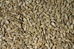 Sunflower seeds. Hand holding unshelled sunflower seeds over seeds background Royalty Free Stock Images