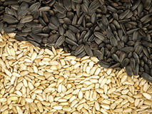 Sunflower Seeds. Royalty Free Stock Image