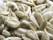 Sunflower seeds. Close up Stock Photography