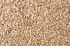 Sunflower Seeds. Texture As Background Royalty Free Stock Photos