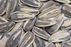 Sunflower seeds. A closeup of sunflower seeds Stock Images