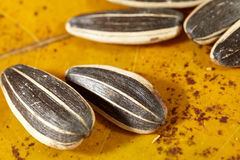Sunflower seeds. Loose sunflower seeds macro close up Stock Images