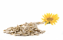 Sunflower and seeds Royalty Free Stock Images