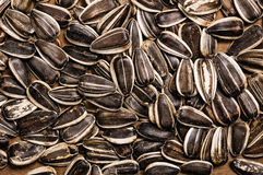 Sunflower seeds. Sunflower seeds detail, close up shot Royalty Free Stock Images
