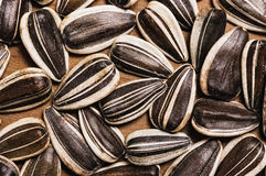 Sunflower seeds. Stock Images