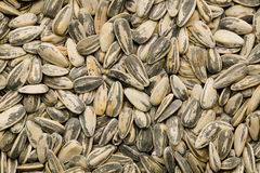Sunflower Seeds. Sunflower seed pattern background material royalty free stock image