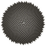 Sunflower Seeds Arranged Fibonacci Pattern stock illustration
