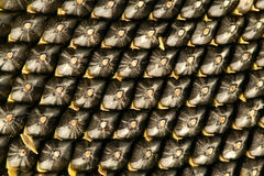 Sunflower seeds background. Closeup of ripe sunflower seeds. Oil plant background Stock Photo