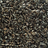 Sunflower seeds background Stock Photography
