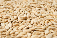 Sunflower seeds background Stock Photo