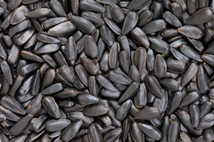 Sunflower seeds background royalty free stock photography